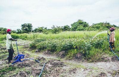 Zambia treadle pumps