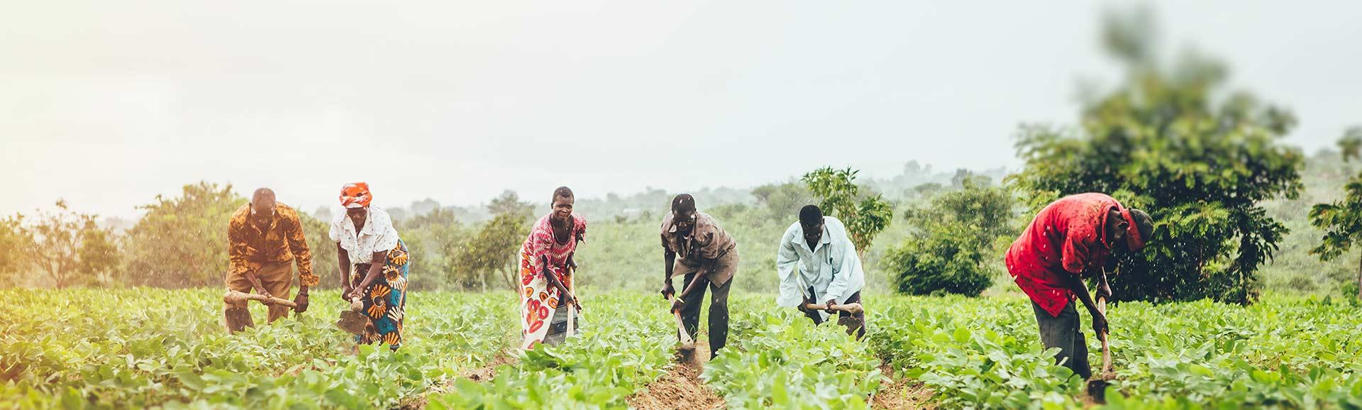 Malawi Program Partners in field