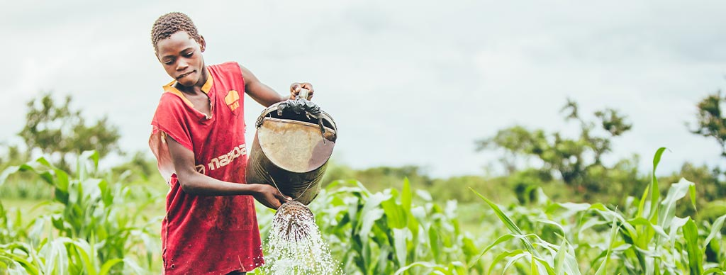 Malawi boy watering garden
