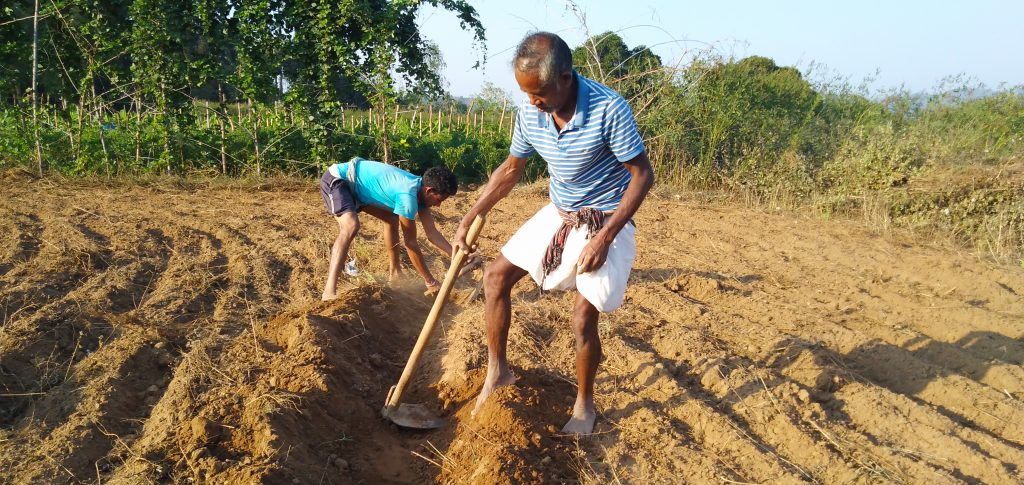A community member from Ghodabadi, India works to prepare the field for planting.