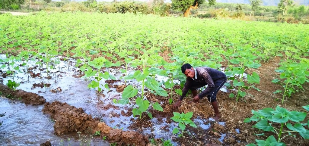 A community member from Ghodabadi, India tends to their garden as the new irrigation system does its job.