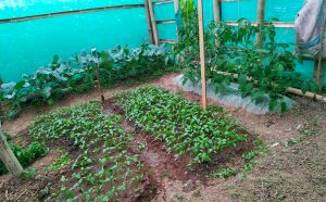 The first seedlings planted by community members in Nepal