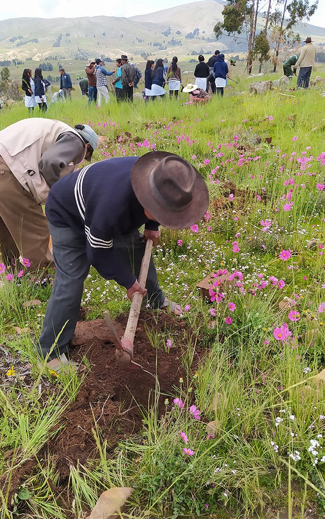 Community members in Bolivia work together to plant new trees as part of their reforestation efforts