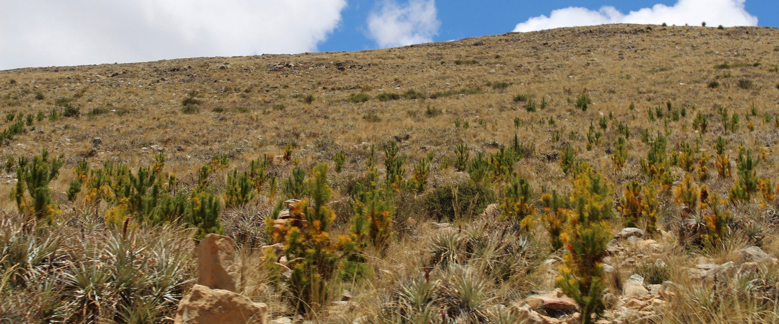 Newly planted trees sprout in Bolivia