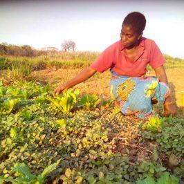 Woman in DR Congo garden
