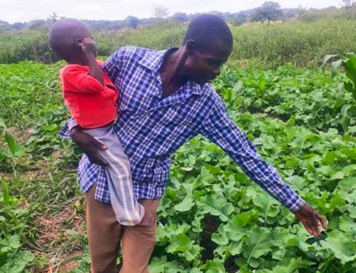 Harvesting Change in Zambia | Zambia Project Update