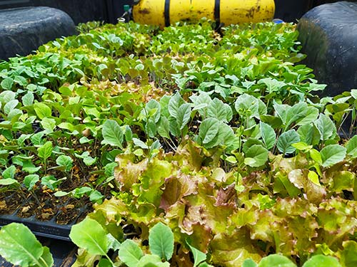 Cold crop seedlings for Bolivia community members