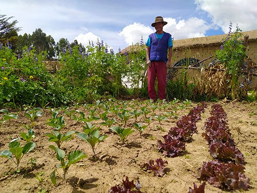 Man in his garden plot as part of a community garden project in Bolivia