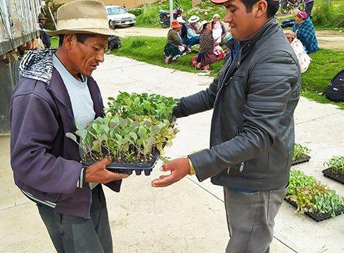 Community member receiving seedlings in Bolivia