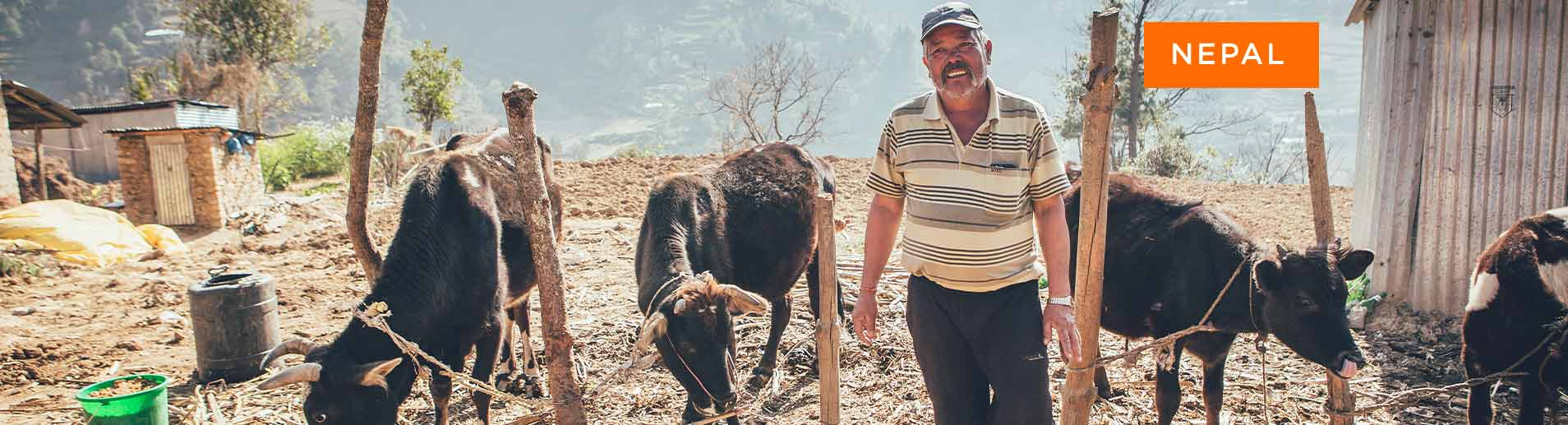 Nepal man with cattle project